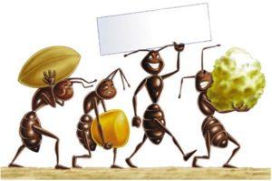 formiche-disegno