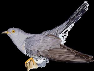 peluche gigante piccione tortora